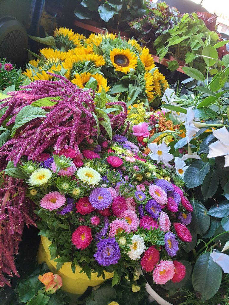 Sonnenblumen, Amaranthus, Astern